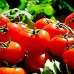 Tomatoes - A Superfood You Can Grow At Home