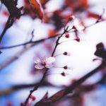 Keeping Your Garden Alive In Winter