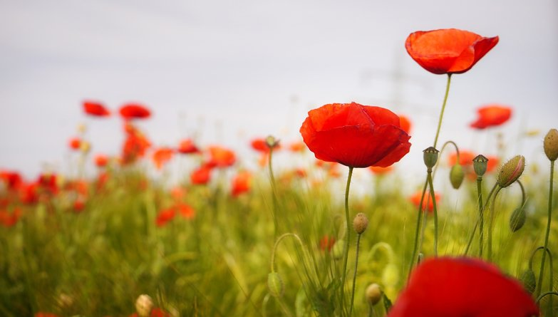 Remembrance Day Services In Kent