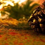 Traditional Christmas Events